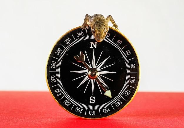 Imagem aproximada de um pequeno lagarto no topo da bússola