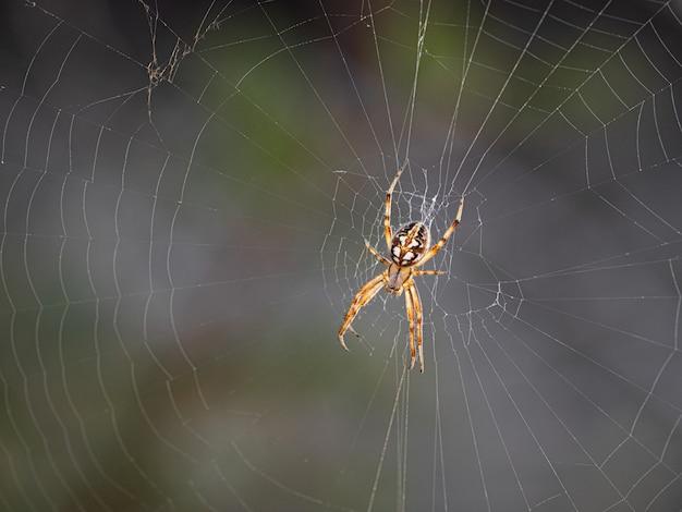 Imagem aproximada de uma aranha em sua teia