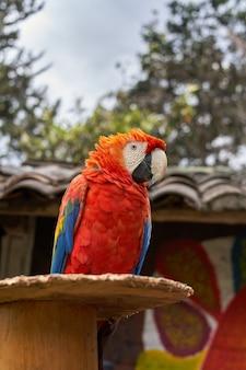 Imagem aproximada de uma arara vermelha colorida no fundo desfocado