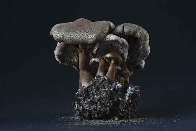 Imagem aproximada de uma estátua fóssil de cogumelos