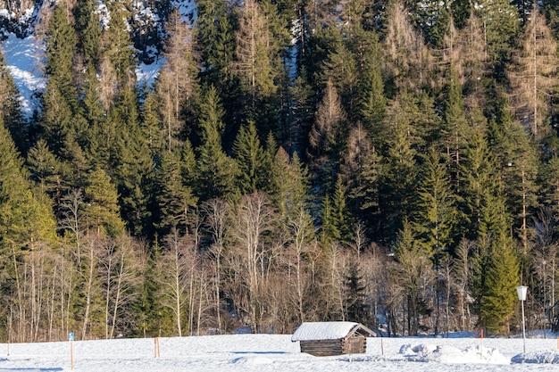 Imagem aproximada de uma floresta cheia de árvores atrás de uma pequena cabana no inverno