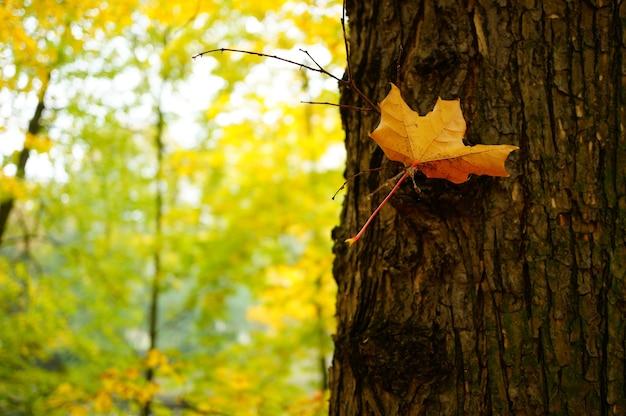 Imagem aproximada de uma folha seca amarela na árvore rodeada por outras