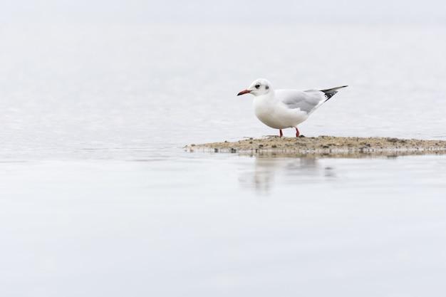 Imagem aproximada de uma gaivota na praia