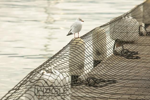 Imagem aproximada de uma gaivota