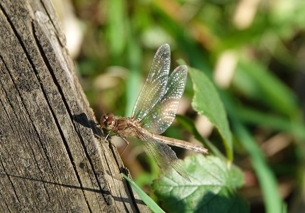 Imagem aproximada de uma libélula perto de uma árvore