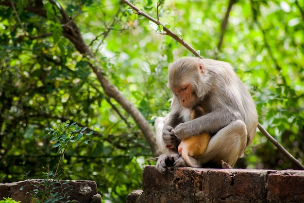 Imagem aproximada de uma mãe macaco segurando o bebê em seu abraço