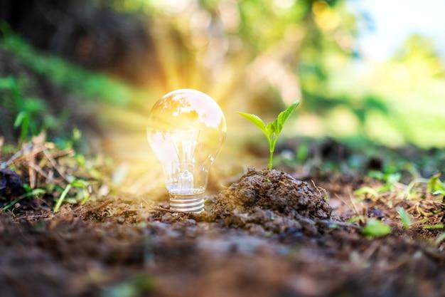 Imagem aproximada de uma pequena árvore e uma lâmpada brilhando em um monte de terra