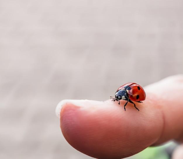 Imagem aproximada de uma pequena joaninha no dedo de uma pessoa