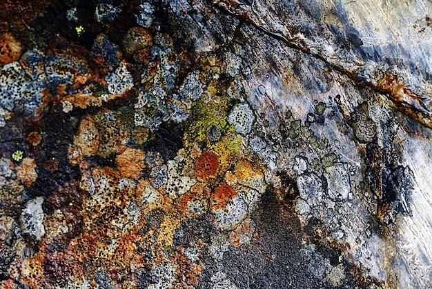 Imagem aproximada de uma textura de rocha com marcas naturais coloridas