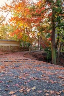 Imagem aproximada do caminho com folhas de árvore vermelhas e amarelas cobertas no outono