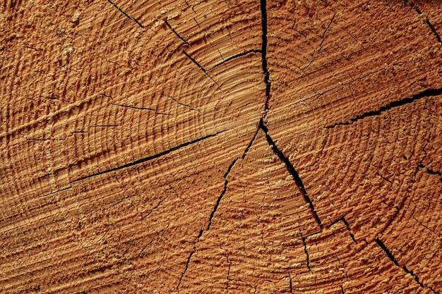 Imagem aproximada dos anéis de crescimento no toco da árvore cortada