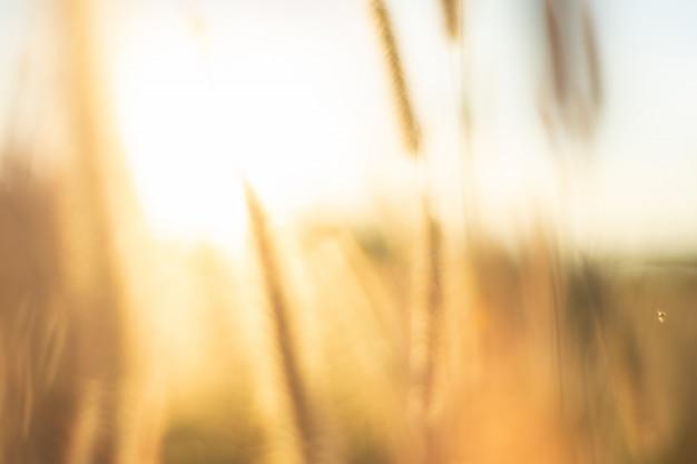Imagem borrada abstrata do prado dourado na montanha