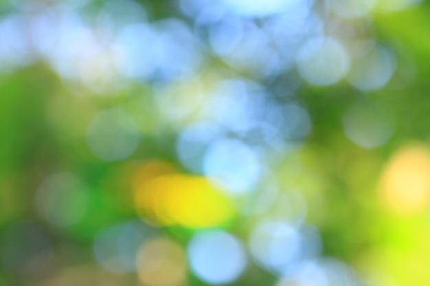 Imagem borrada de árvores em uma floresta de verão. foto com uma cópia - espaço.