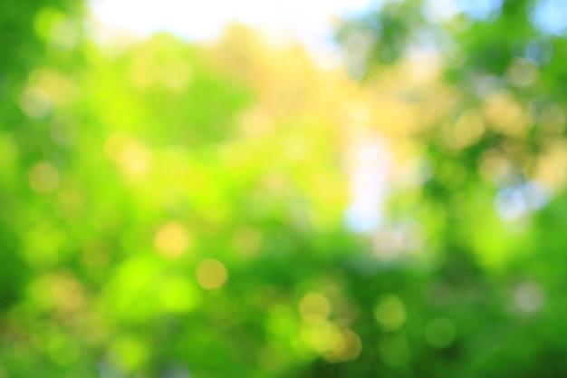 Imagem borrada de folhagem fresca no parque. foto com uma cópia - espaço.
