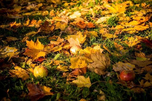 Imagem colorida do backround das folhas de outono caídas perfeitas