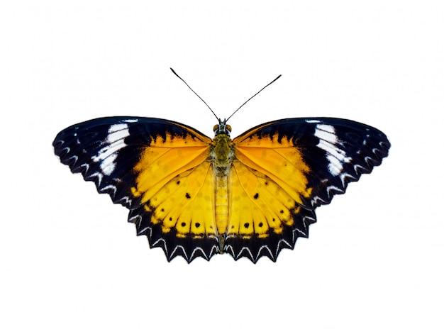 Imagem da borboleta de lacewings de leopardo (cethosia cyane euanthes) isolada no fundo branco