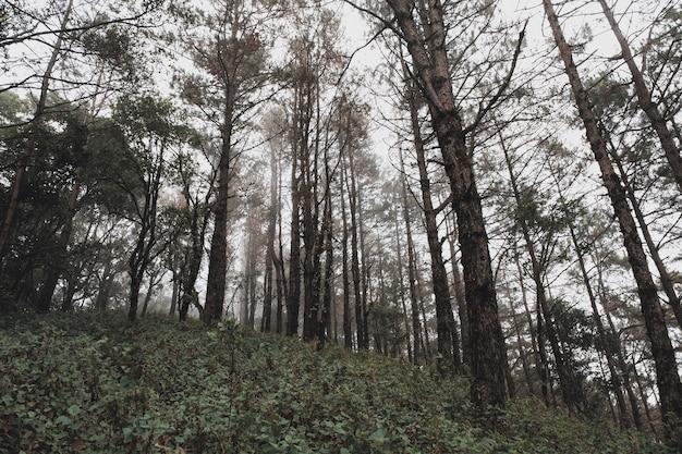 Imagem da paisagem da floresta tropical verdejante