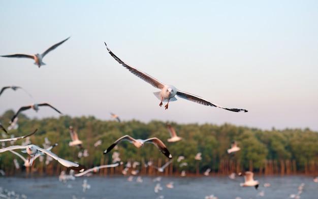 Imagem da paisagem das gaivotas que voam no céu no por do sol.