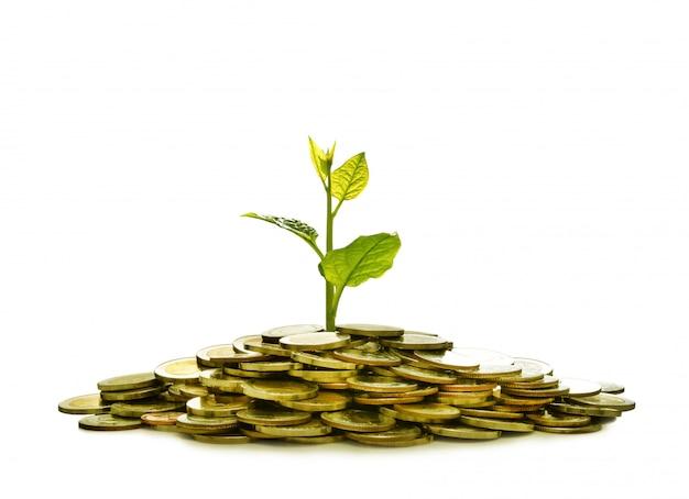 Imagem da pilha de moedas com planta em cima para negócios, economia, crescimento
