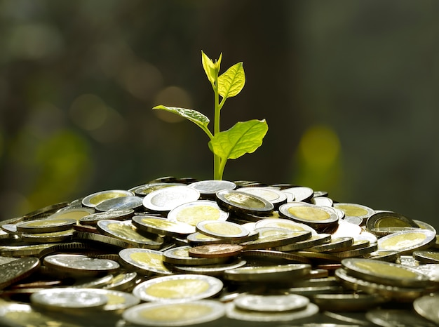 Imagem da pilha de moedas com planta em cima para negócios