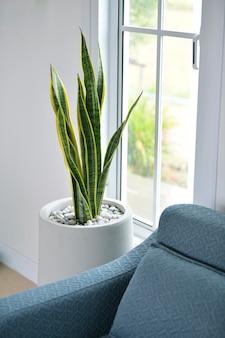 Imagem da planta snake, uma árvore que adorna a casa