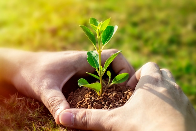 Imagem da planta verde nas mãos humanas.