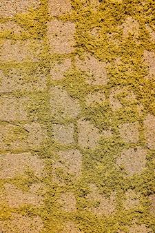 Imagem da textura de detalhes do caminho de tijolos no piso coberto por muito musgo e algas