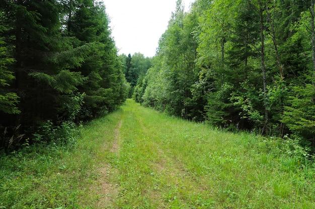 Imagem da trilha da floresta