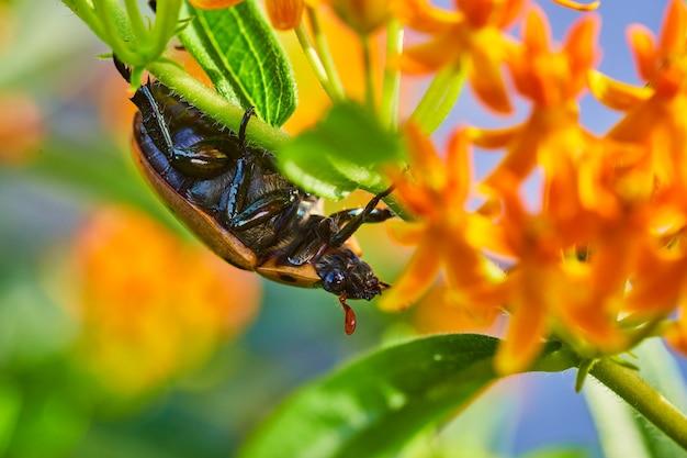 Imagem da vista lateral do besouro em uma planta verde e laranja