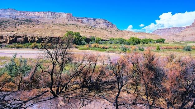 Imagem de árvores danificadas por incêndios florestais que ficaram todas pretas nas montanhas do deserto