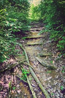 Imagem de caminho de terra natural na floresta com raízes para degraus