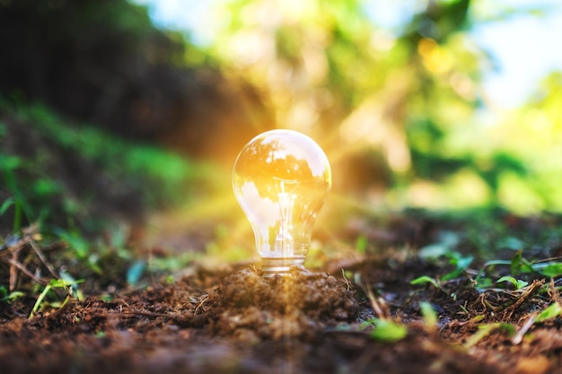 Imagem de close de uma lâmpada acesa em um monte de terra