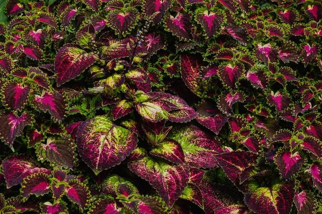 Imagem de close-up da parede de belas flores.