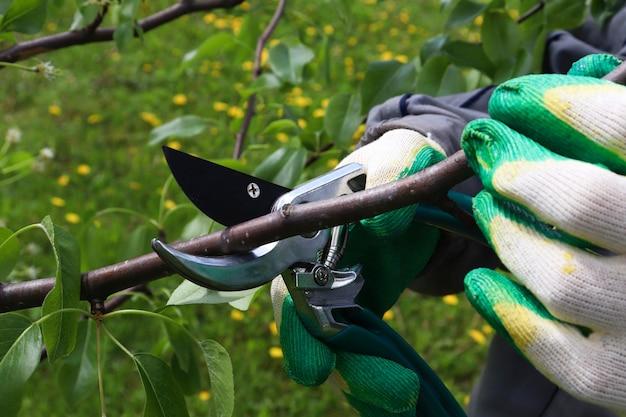 Imagem de close up de mãos com podador aparando galho de árvore de pera no fundo do jardim de verão. ferramentas de jardim úteis com lâminas de aço inoxidável. tesouras manuais para aparar plantas no jardim.