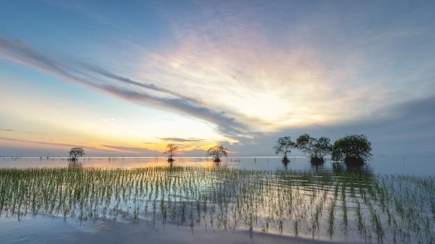 Imagem de cultivo de arroz no lago