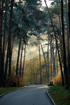 Imagem de estrada, árvores em dia de verão