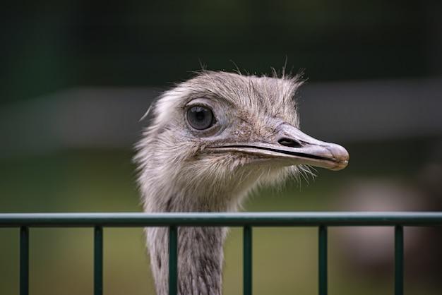 Imagem de foco raso de um avestruz atrás de uma cerca