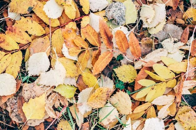 Imagem de fundo de folhas caídas de outono