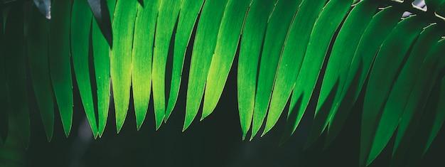 Imagem de fundo panorâmica de folhas de samambaia escura