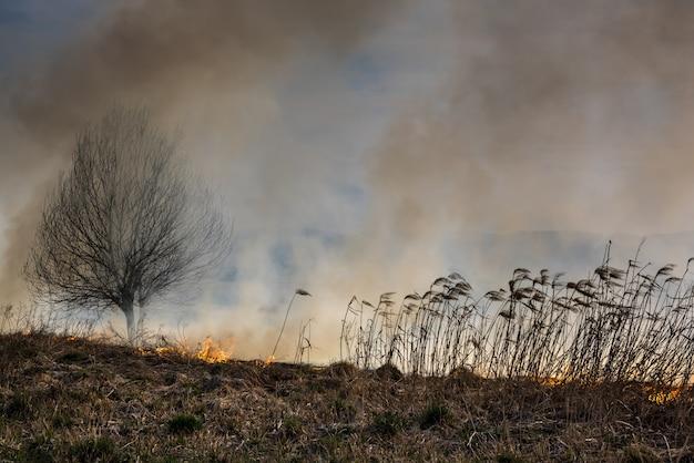Imagem de global e seu risco de desastres naturais. queimando juncos secos. perigo global.