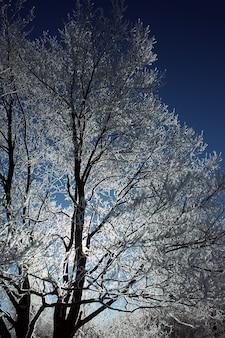 Imagem de grandes árvores com galhos cobertos de geada com efeito de vinheta
