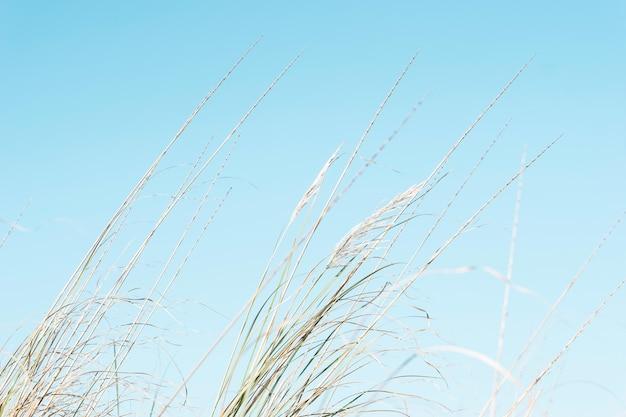 Imagem de junco sob o céu azul