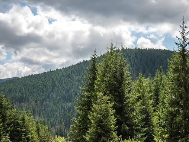 Imagem de montanha com pinheiros e cloudsin um dia ensolarado de verão