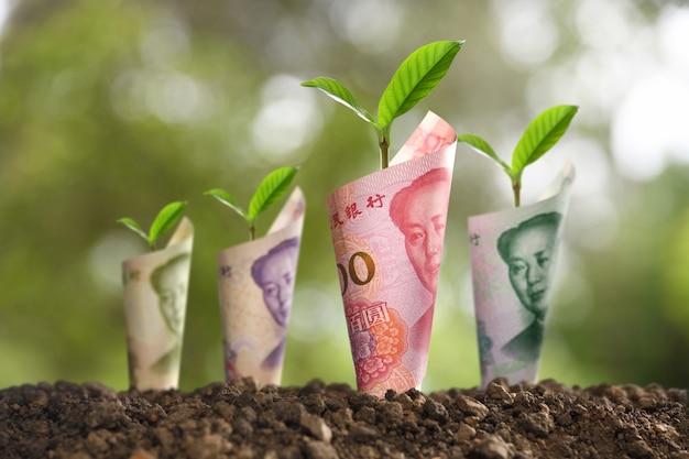 Imagem de notas de banco roladas em torno de plantas no solo para negócios, economia, crescimento, economia