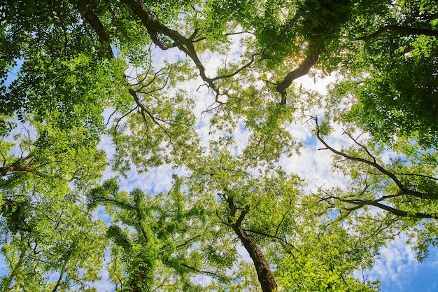 Imagem de olhando para uma floresta com folhas verdes vibrantes