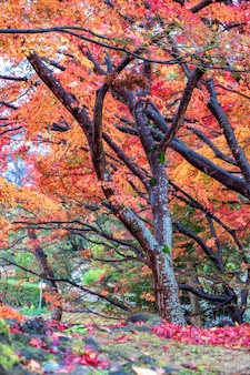 Imagem de paisagem de folhas de árvore de cores vermelhas e amarelas no outono