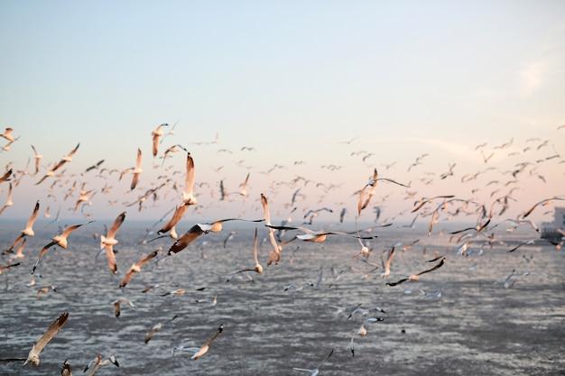 Imagem de paisagem de gaivotas voando no céu ao pôr do sol