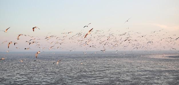 Imagem de paisagem de muitas gaivotas voando no céu ao pôr do sol.