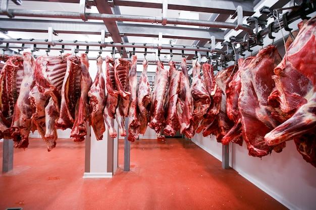 Imagem de pedaços de meia carne frescos pendurados e dispostos em uma fileira em uma grande geladeira na indústria de carnes da geladeira.