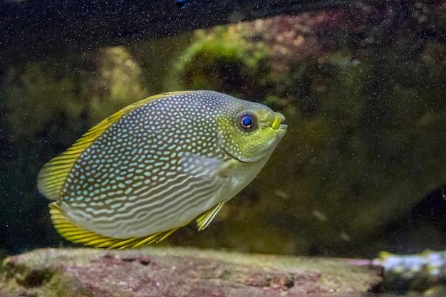 Imagem de peixe anjo, peixe anjo marinho. animal de vida selvagem.